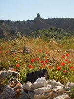 The Sphinx - names by the Aussie Diggers - with poppies in the foreground.