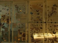 Beautiful display of butterflies and other insects.