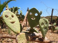 The Cacti Family - outside the Tarverna at Elifonisi.