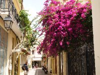 Beautiful bouganvillea in a Rethymno street.
