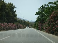 Many of the roads in Crete are lined with Oleander bushes - white, pink, deep pink.