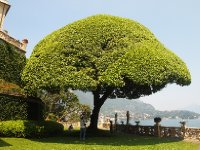 The Holm Oak trees in the grounds of Villa Balbianello provide amazing shade.