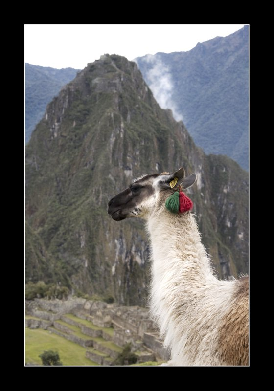 Macchu Picchu Mountain with Alpaca