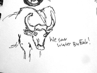 Waterbuffalo sketch