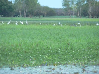white_birds.jpg