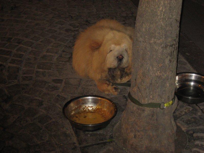 Poor dog....dog??