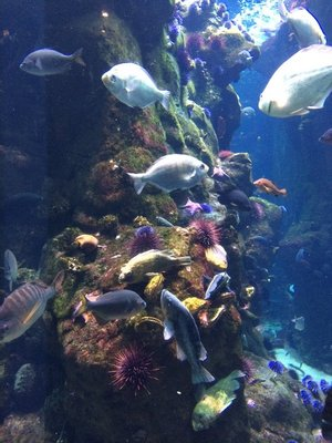 Coral Reef at CA Academy of Science