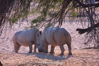 Boy meets Girl Rhino