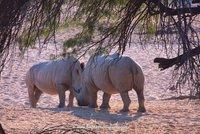 Boy meets Girl Rhino