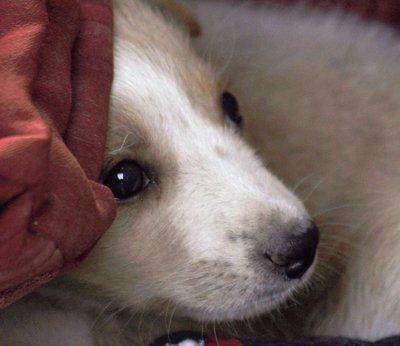 Dog1a