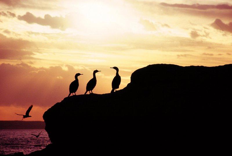 Cormorants at Puerto Piramides, Valdes Peninsula, Patagonia Argentina