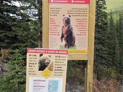 Bear Alerts