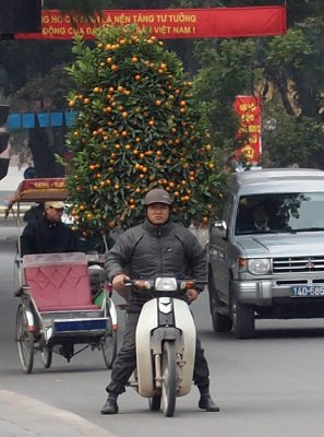 Tet kumquat tree