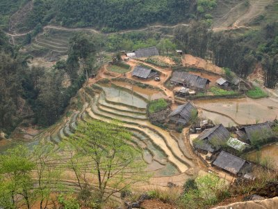 Sapa paddy fields