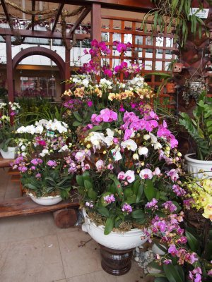 Orchids at the flower market