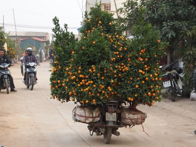 Kumquat road