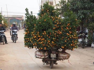 Kumquat_road__January.jpg