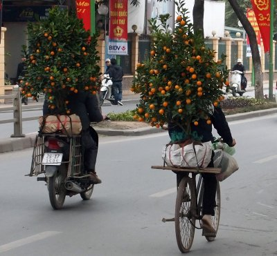 Pair of kumquats on Yen Phu