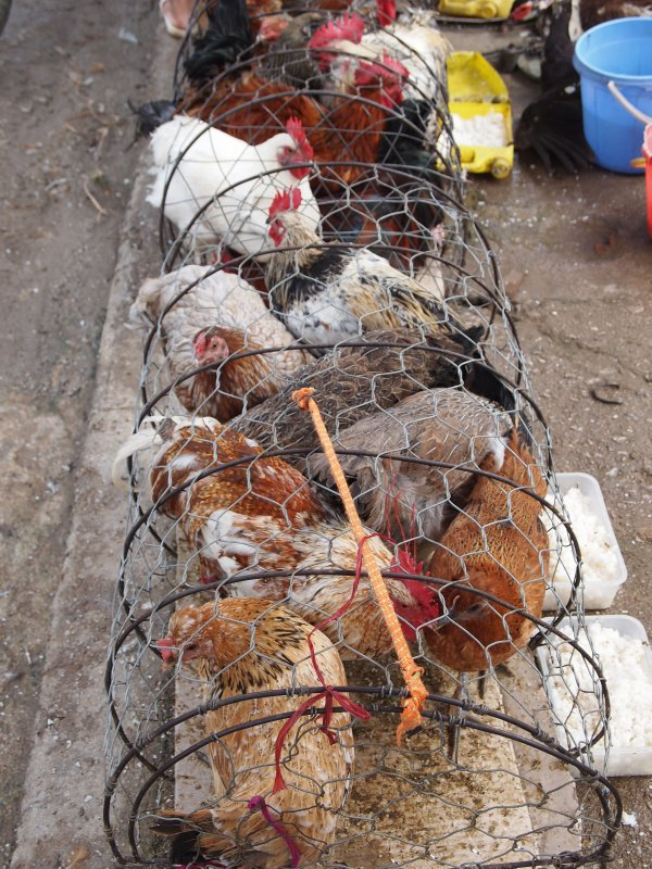 Chickens, Meo Vac market