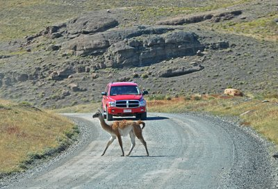 Guanaco Crossing Road