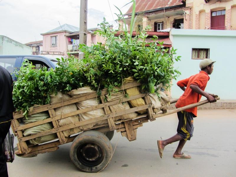 Tana Transport