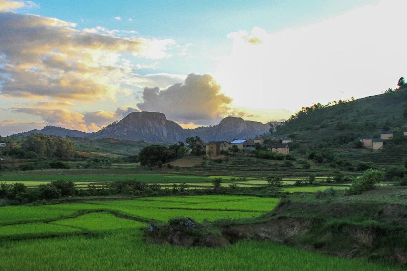 Madagascar Greenery