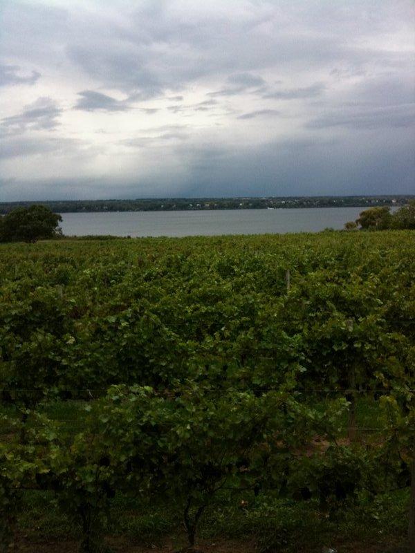 Ventosa Vineyard