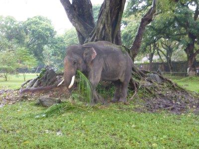 Huy_pagoda_elephant.jpg