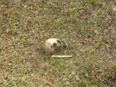 kf_skull.jpg