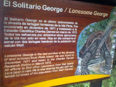 """Lonesome George"" (Unfortunately not mating anymore. At age 100, and the only survivor of his species.)"