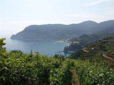 Vineyard with view back to Monterosso