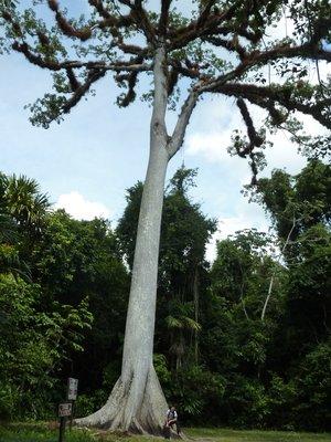 yann_arbre.jpg