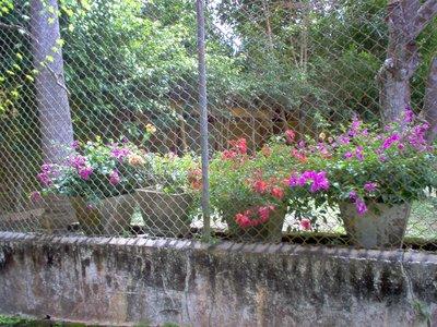Flowers_all_over.jpg