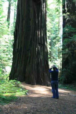 Paul taking a picture of another big tree