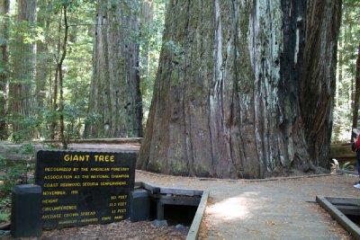 The 'Giant Tree'