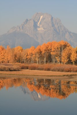 Mountain / Tree view at Oxbow Bend