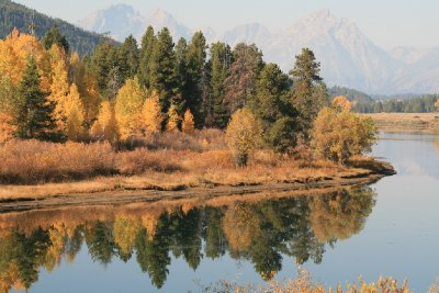 Reflected Trees at Oxbow Bend