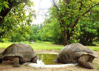 7 tortoise