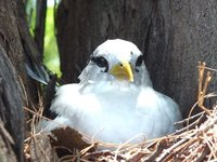 10_bird.jpg