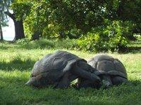 1_tortoise.jpg