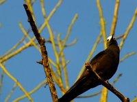 2_bird.jpg