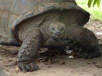 2_tortoise.jpg