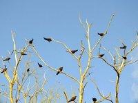 3_bird.jpg