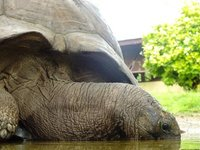 3_tortoise.jpg