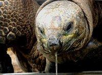 4_tortoise.jpg