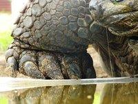 5_tortoise.jpg