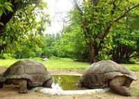 7_tortoise.jpg