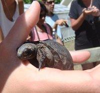 8_tortoise.jpg
