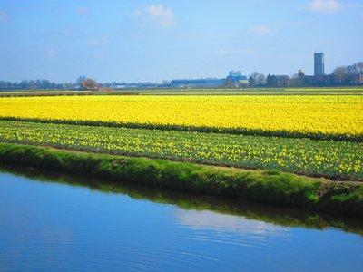 A Flower Field