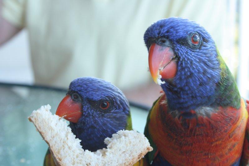 Birds at Hamilton Island